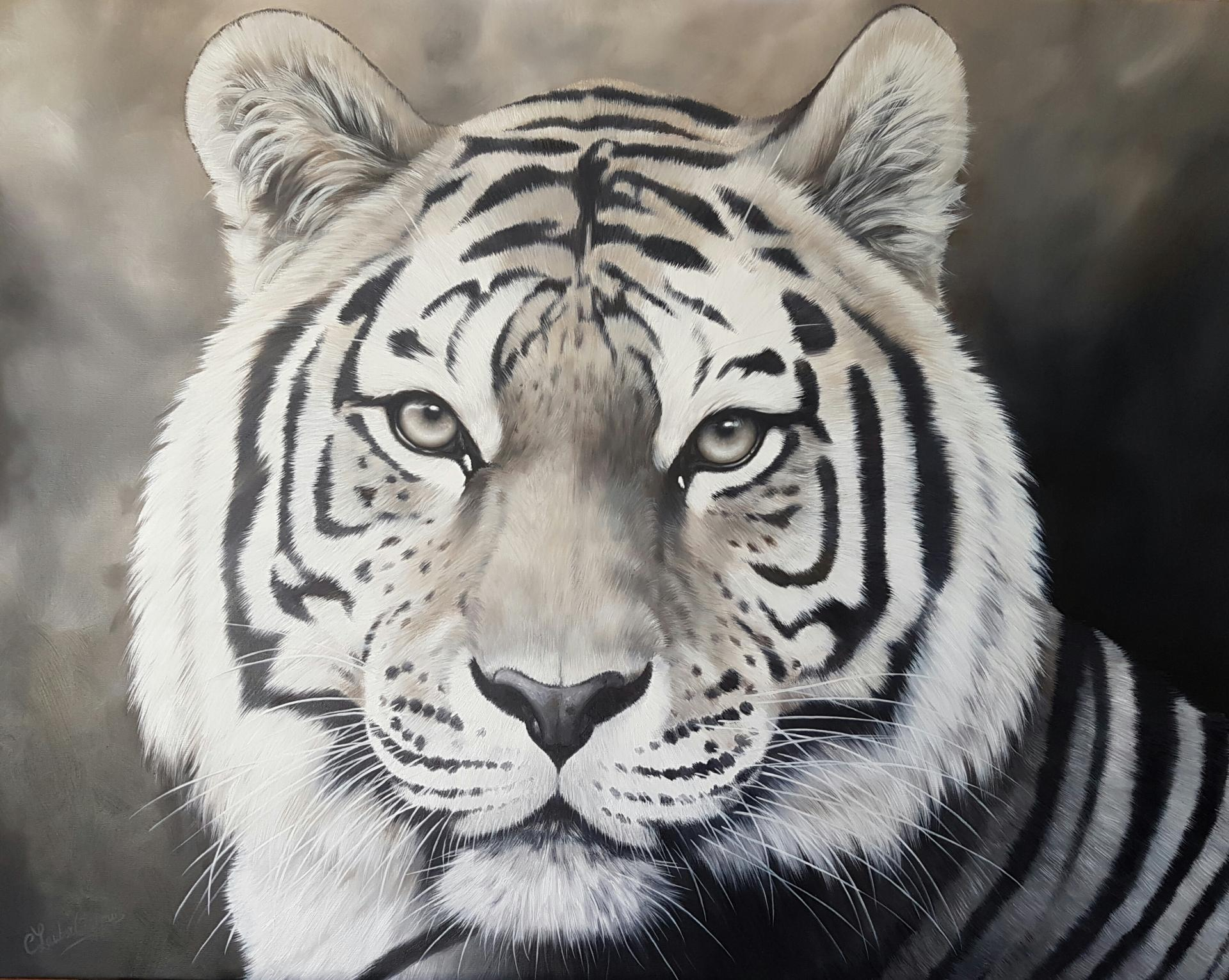 Tigre 73x92cm