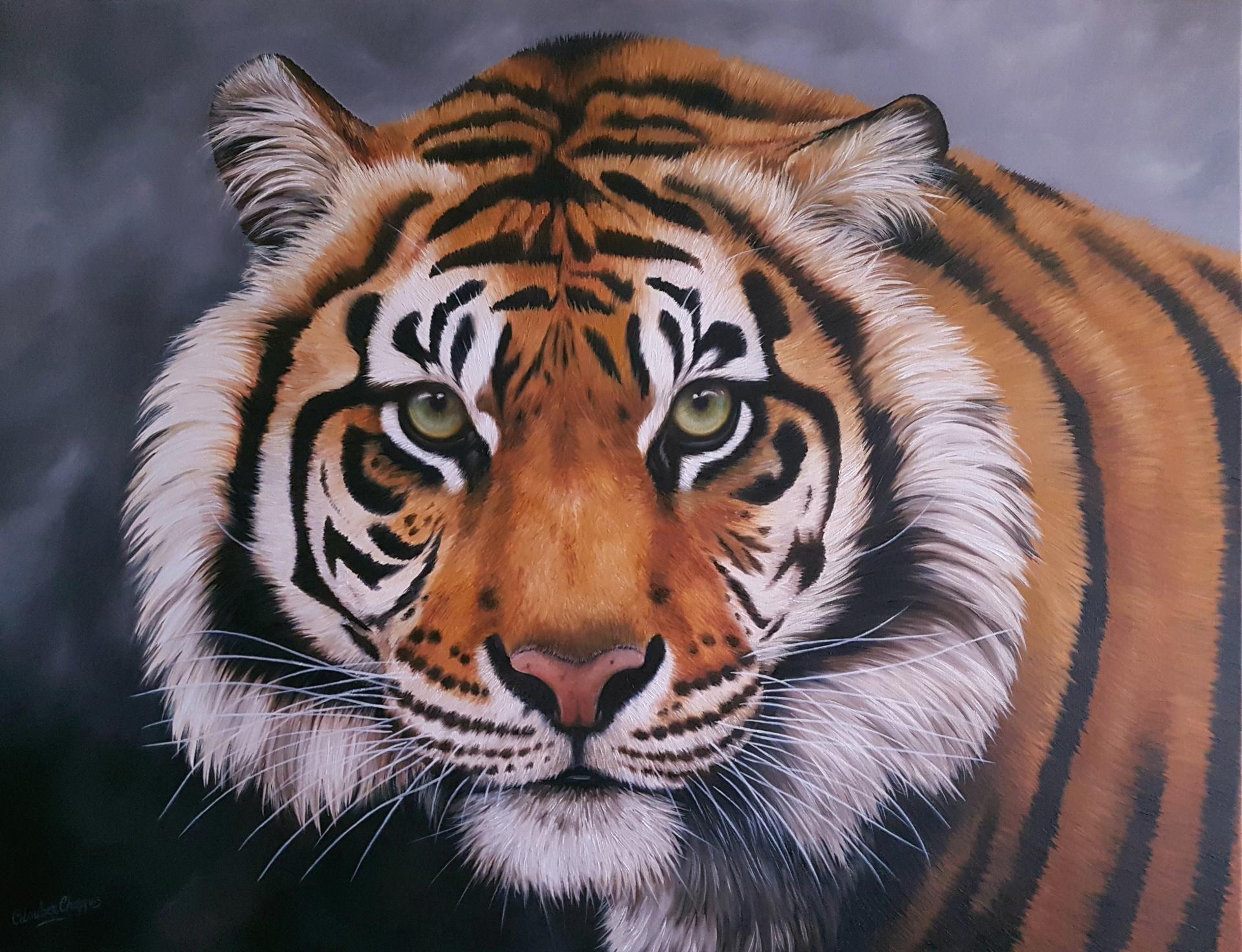 Tigre 80x100cm