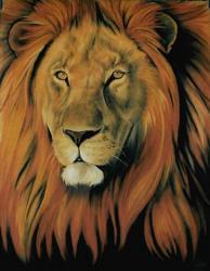 Lion au pastel 60*80cm