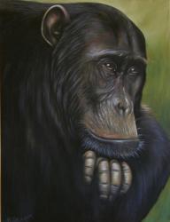 Chimpanzé au pastel 50*70cm